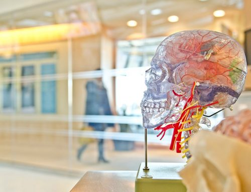 What we know about the structures of human brain (and what we don't)